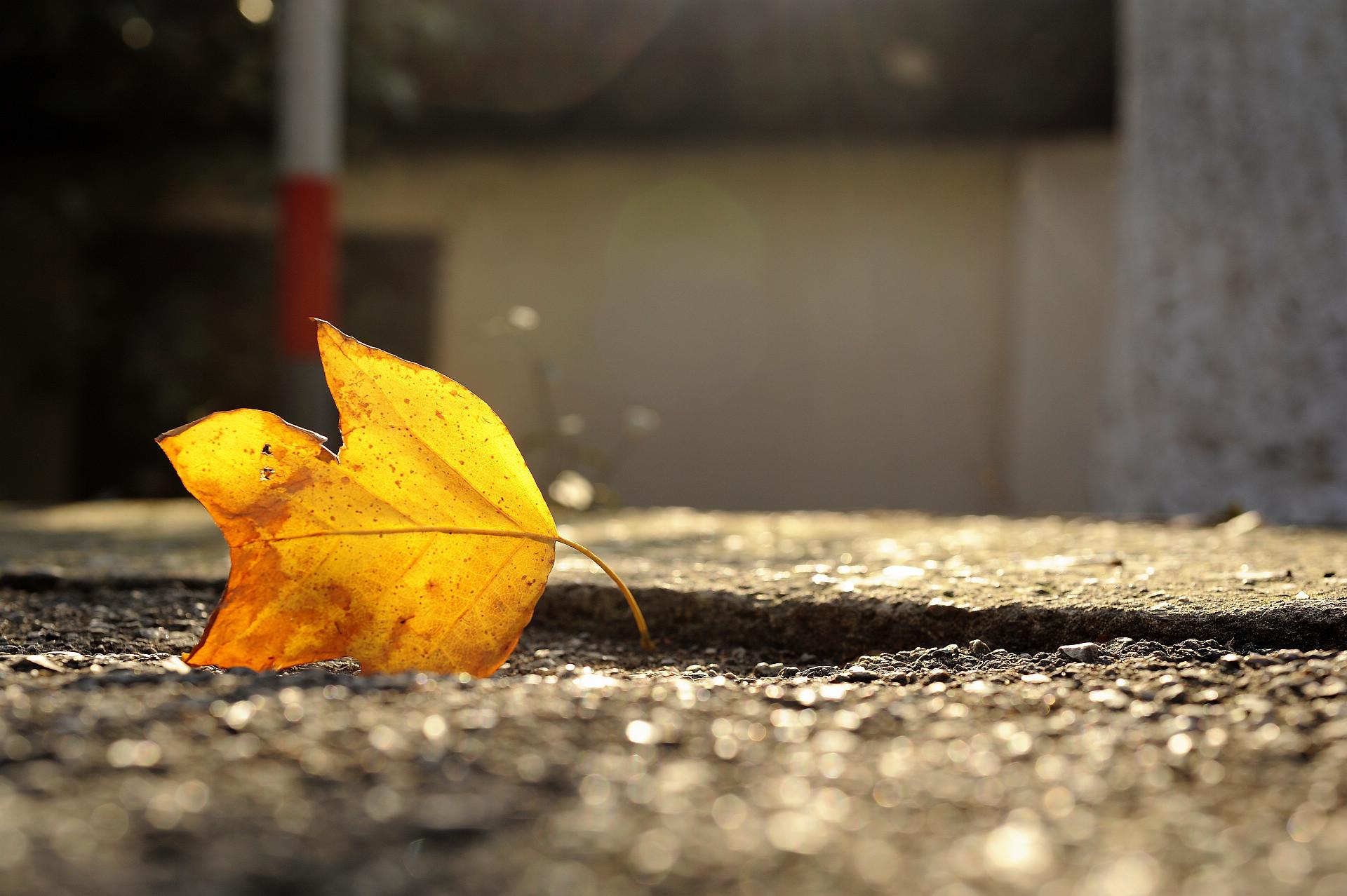 yellow_leaf.jpg